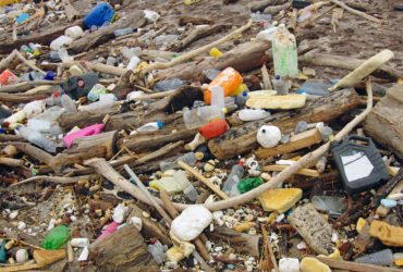 Plastic Ubiquitous Throughout Global Marine Food Chain